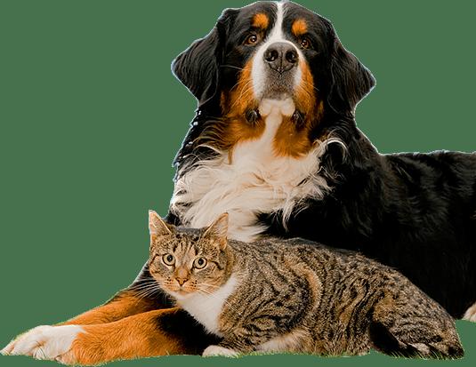 luchtreiniger-huisdieren