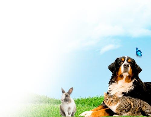 luchtreinigers-huisdieren
