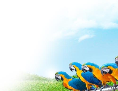 luchtreiniger-vogels-ionisator