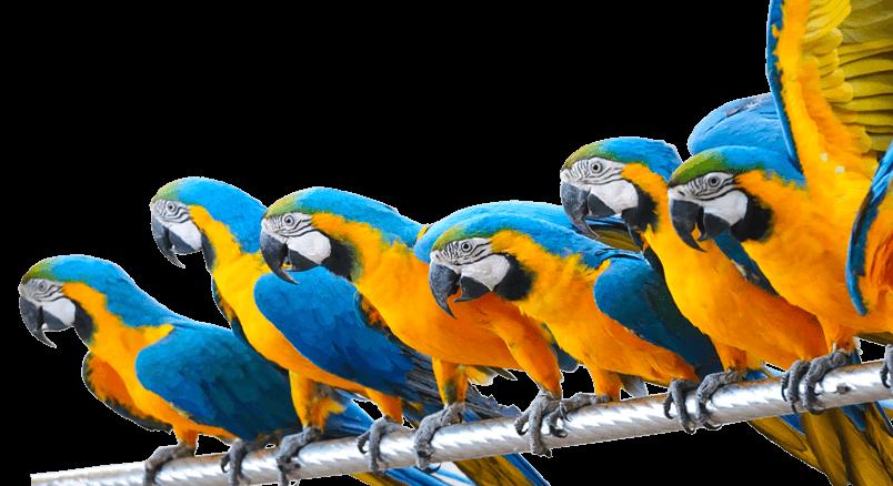 luchtreiniger-vogels